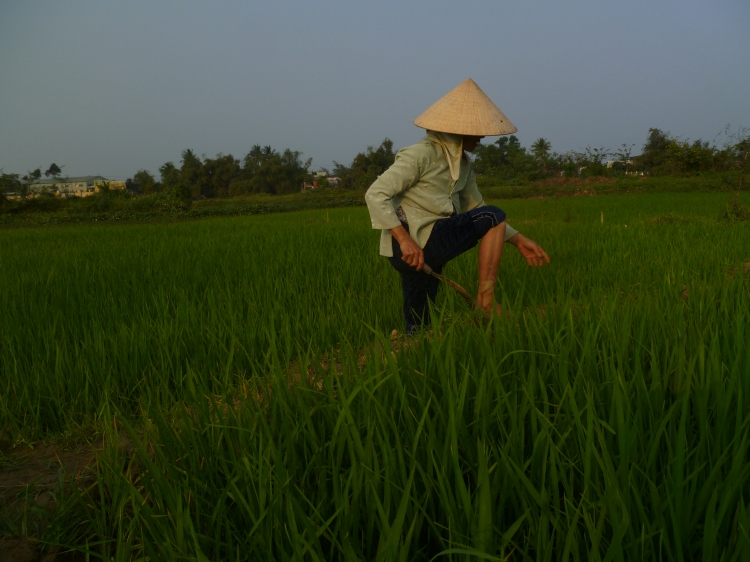 In the rice paddys